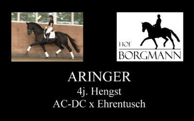 Aringer